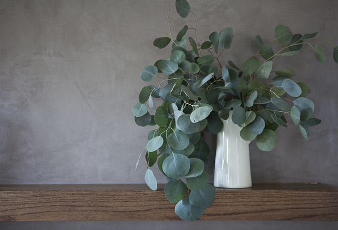 Eucalyptus- I Miss Picking Fresh Eucalyptus In Peru And