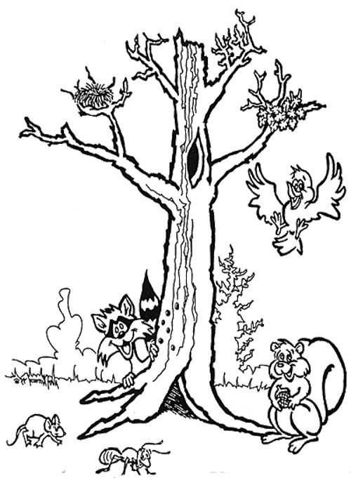 Bare Tree With Animal Coloring Page
