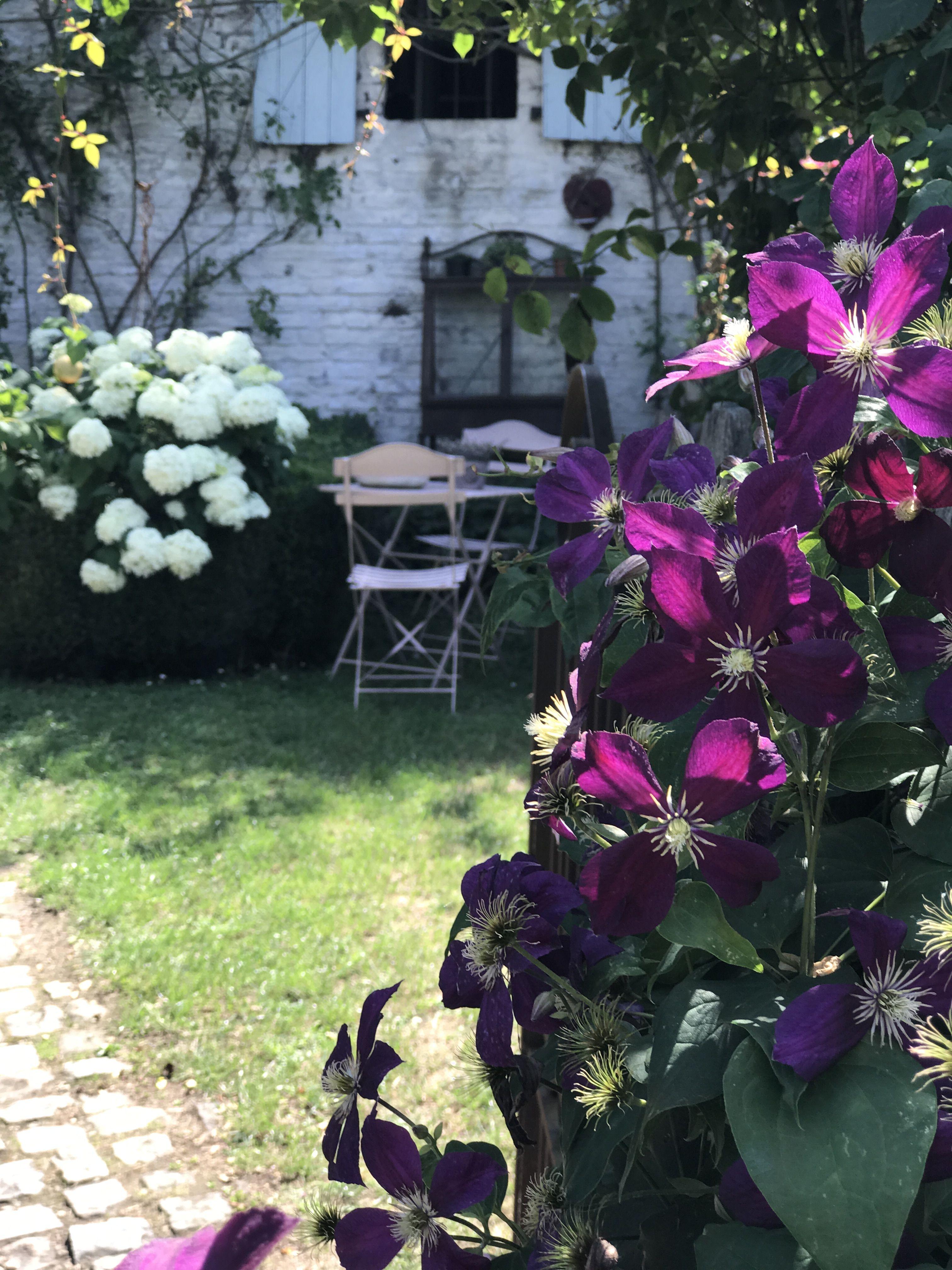 Clematite Deco Jardin Www Filroses Com Rosier Anglais Rosier Grimpant Rosier