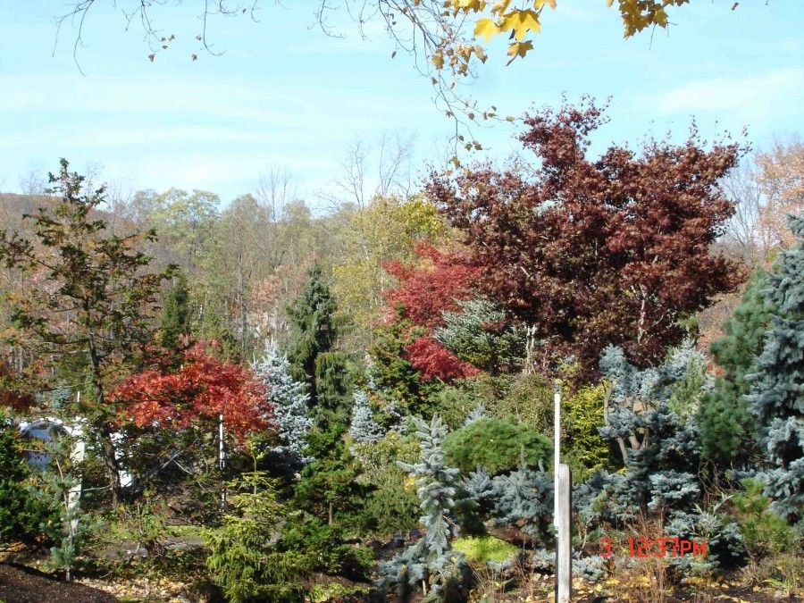 Hickory Hollow Nursery Garden Center In Orange County Ny This Photo Shows How Diverse Of A Large Selection Ornamental Specimen Trees We Stock