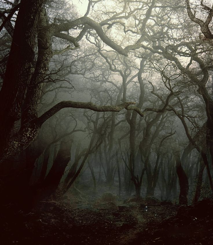 Gruselige Wälder
