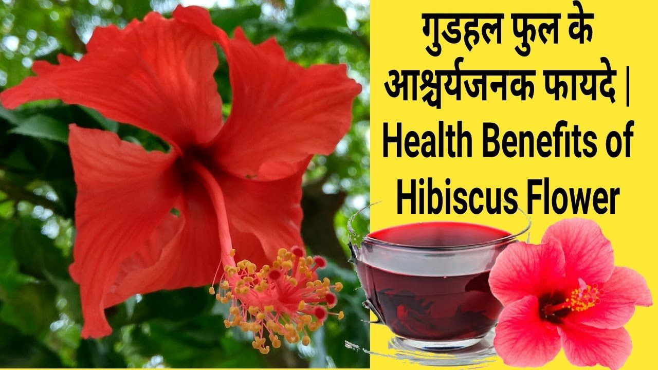 Perfect 5 Lines On Hibiscus Flower In Hindi And Description In 2020 Hibiscus Flower Meaning Hibiscus Tea Benefits Hibiscus