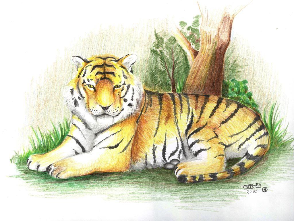 Tigre Realizado A Lapices De Colores El Verde Frio De La Hierva A