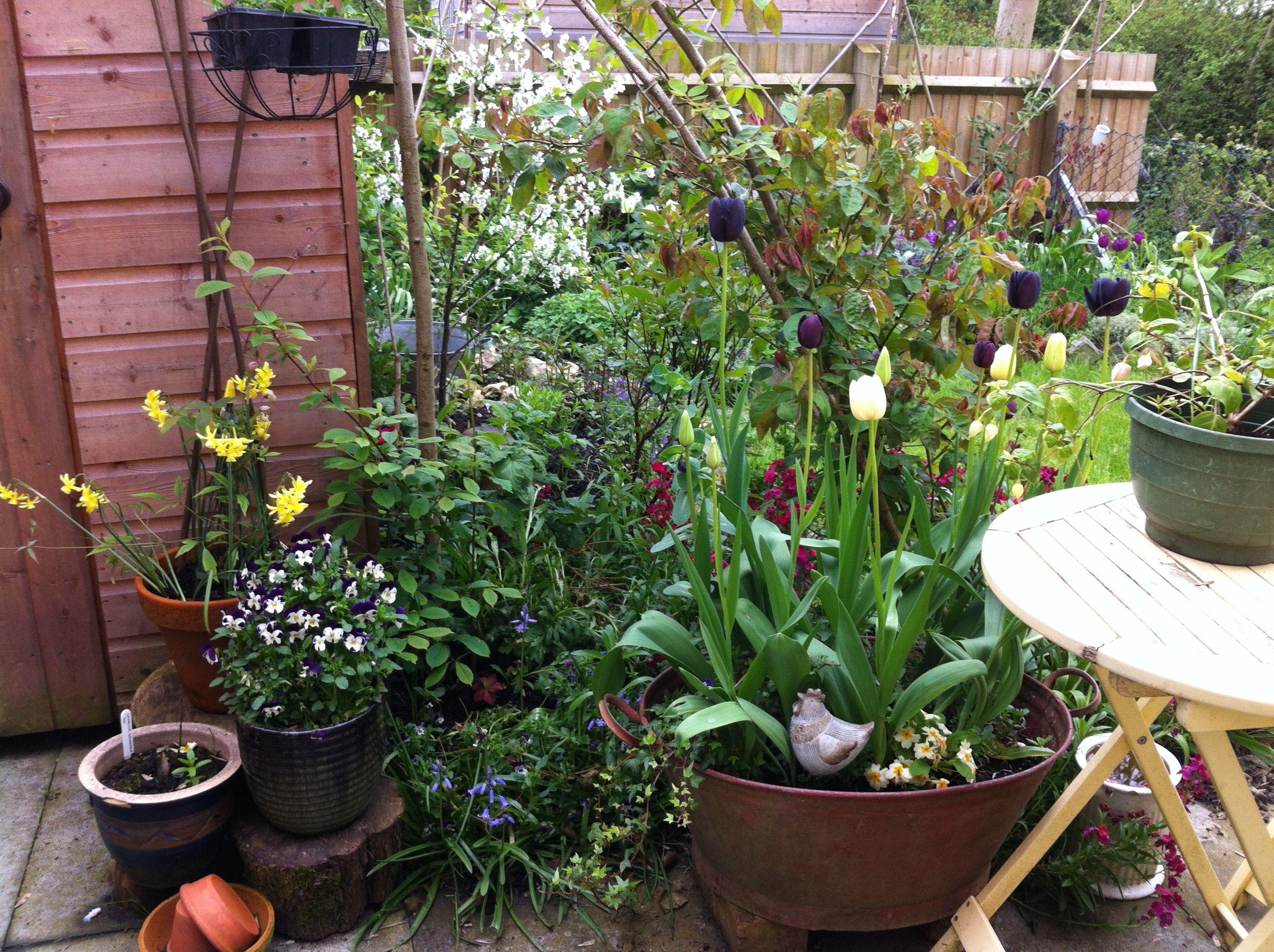 My garden Spring 2014
