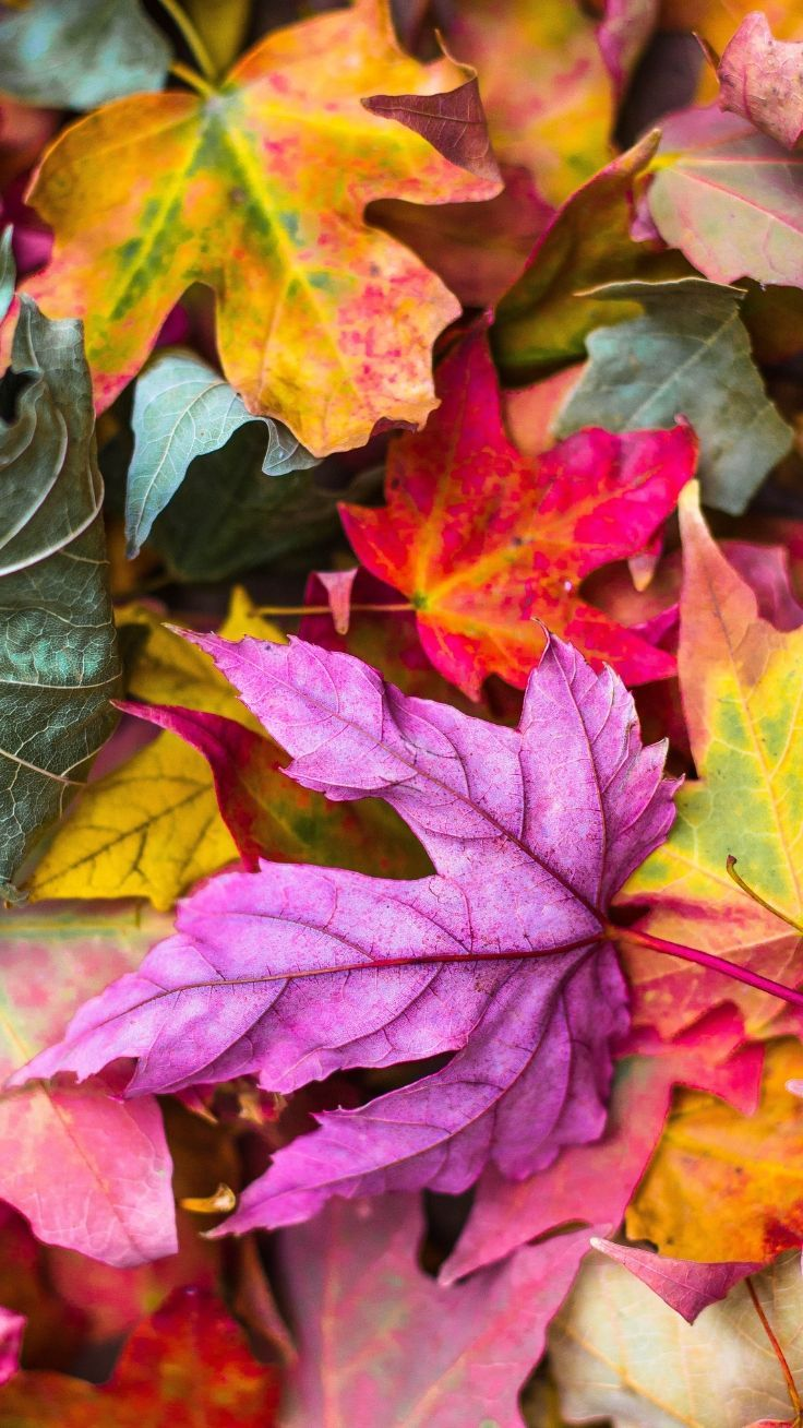 14 iPhone Wallpapers To Fall In Love With Autumn