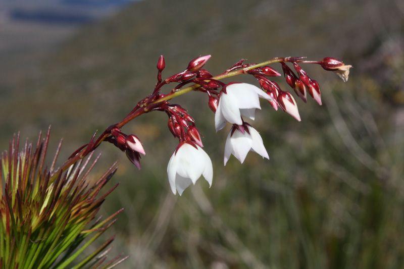 Flora desconhecida — Ciência Hoje