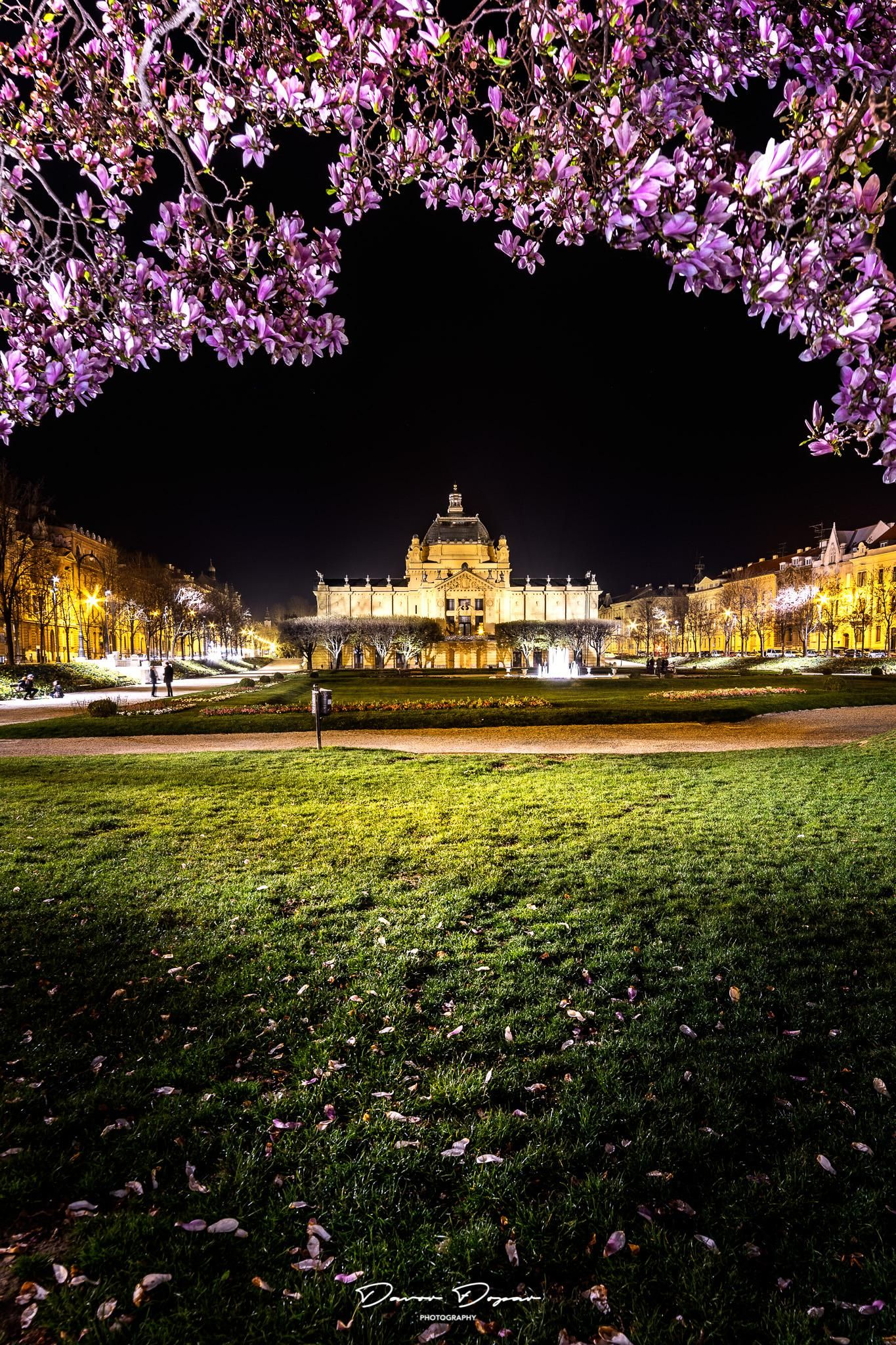 Under The Magnolia Tree King Tomislav Square In Zagreb Croatia City Cities Buildings Photography Magnolia Trees Zagreb Croatia Zagreb