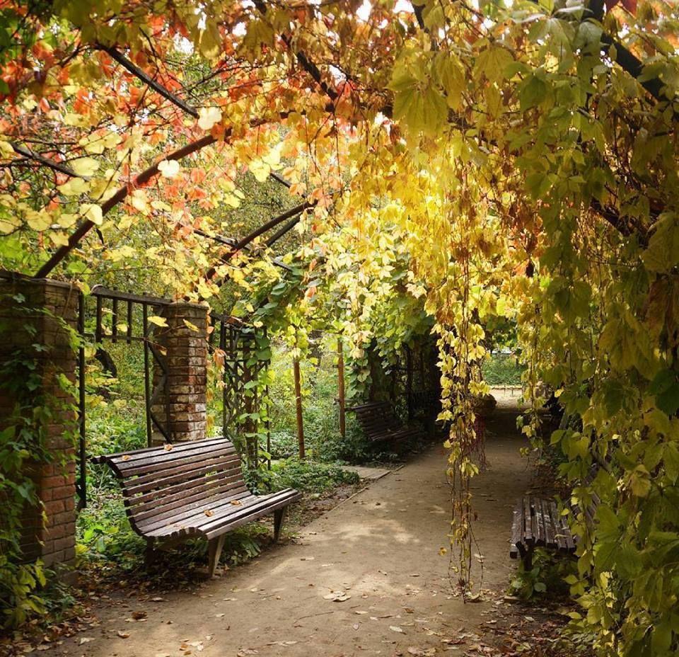 Осень в Ботаническом саду   Ботанические сады, Фотографии ...