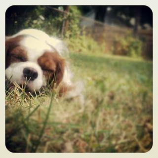 Puppy Chew