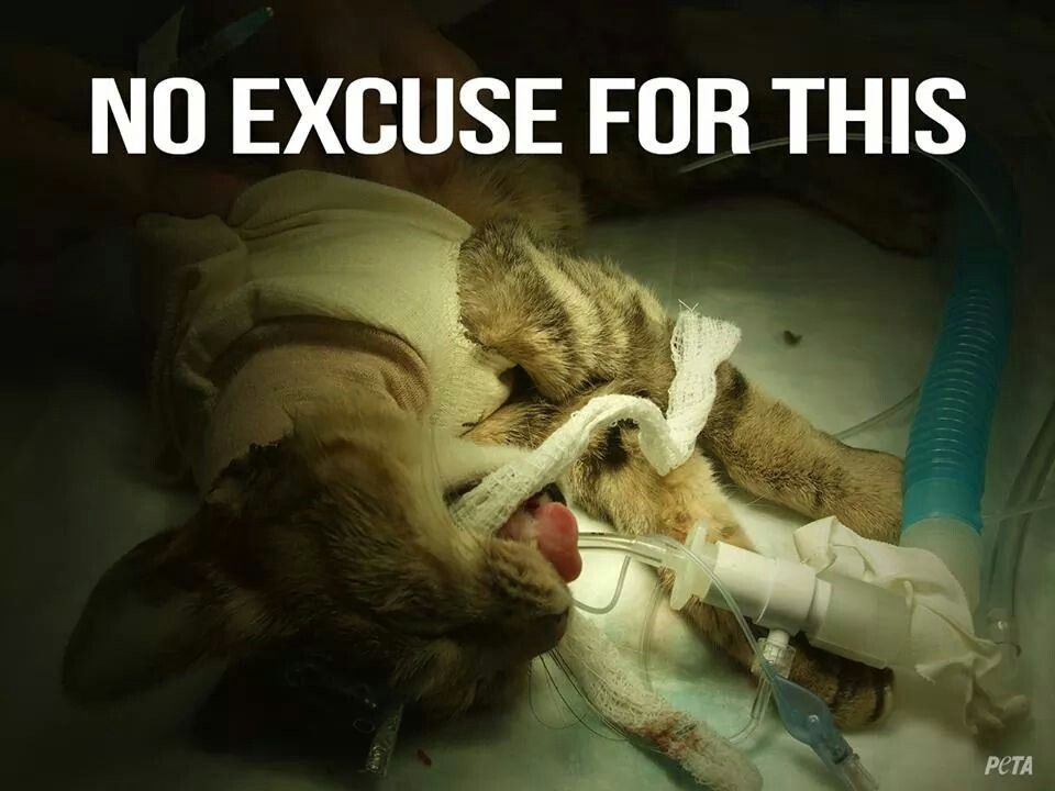 Animal testing is barbaric!!