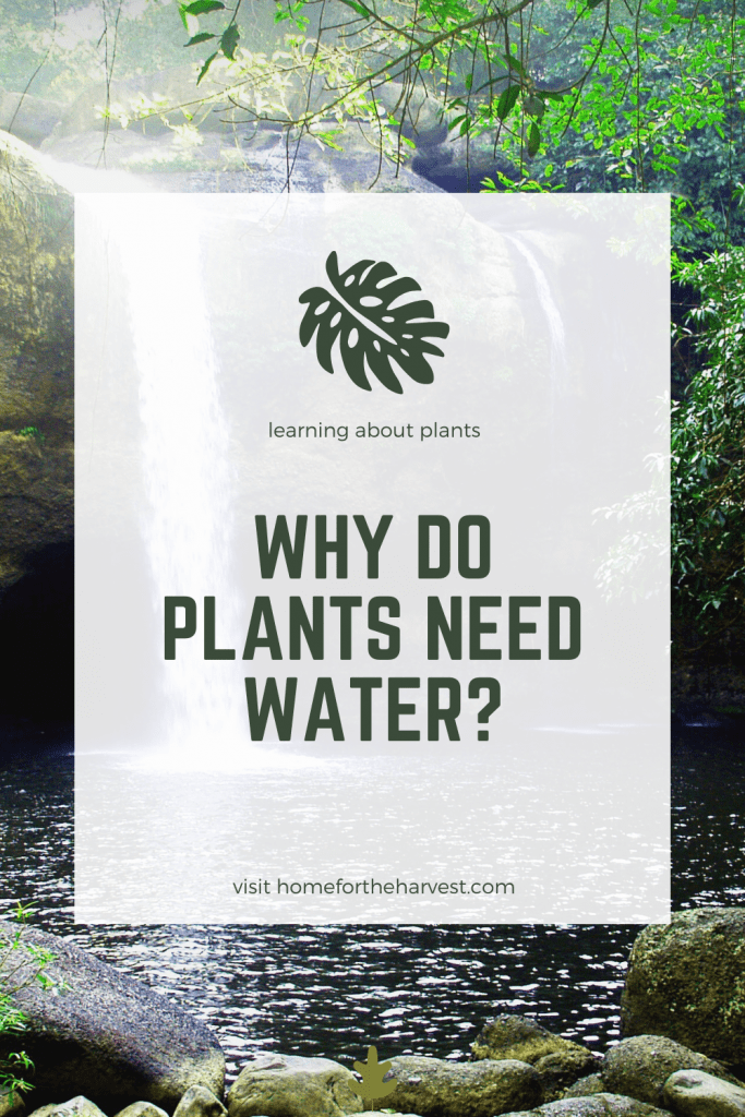 Why Do Plants Need Water? in 2020 | Plant needs, Gardening ...
