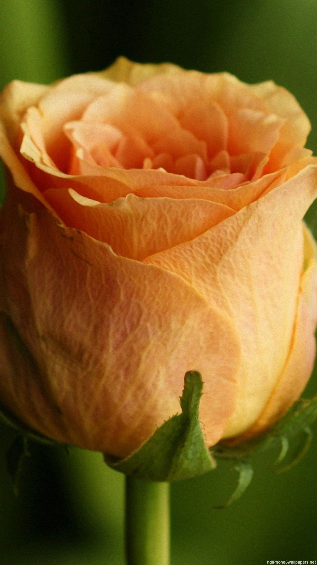 Pin by clemen g on pantalla pinterest rip mom flowers and flora