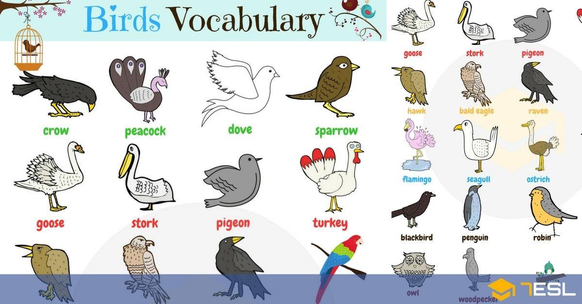 Bird Names List Of Birds With Useful Birds Images List