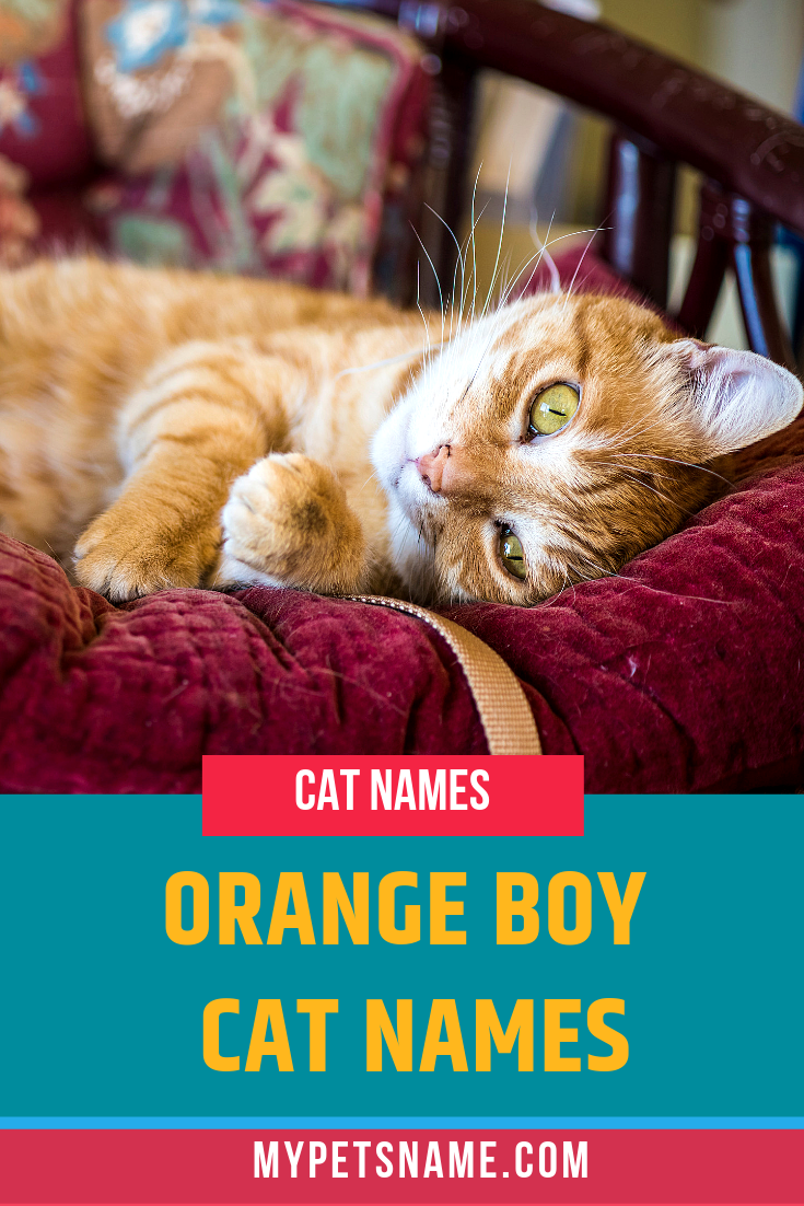 Whether You Want Something That Has King Of The Jungle Vibes Or Something That Reflects Your New Male Orange Cat S Talkative And Boy Cat Names Cat Names Cats