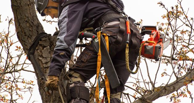 Know How Becoming An Arborist Is A Great Career Option Arborist Career Options Tree Service