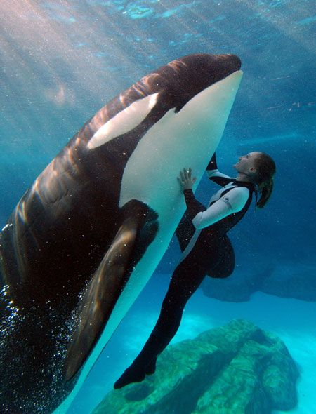 Swim with a killer whale Bucket list Pinterest Killer whales - marine mammal trainer sample resume