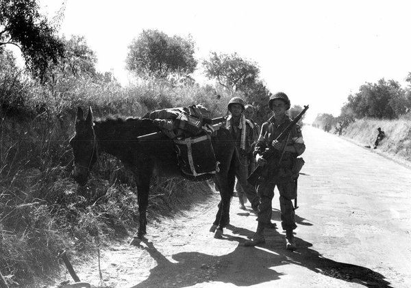 Paratroopers of the 82nd Airborne Division use a donkey to carry ammunition. Sicily, July 1943. #WW2