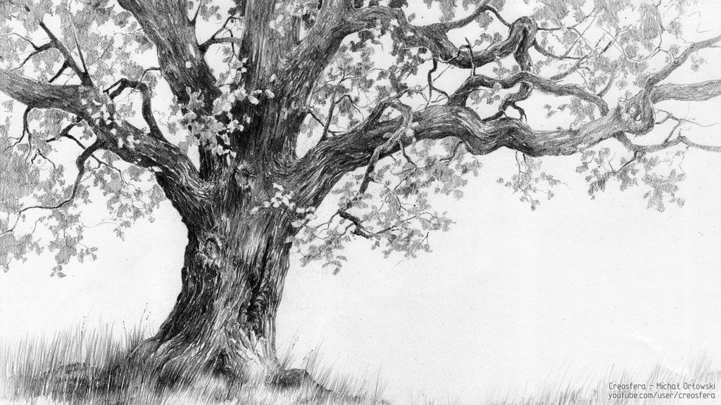 oak tree tutorial by on deviantart tattoos oak tree drawings trees. Black Bedroom Furniture Sets. Home Design Ideas