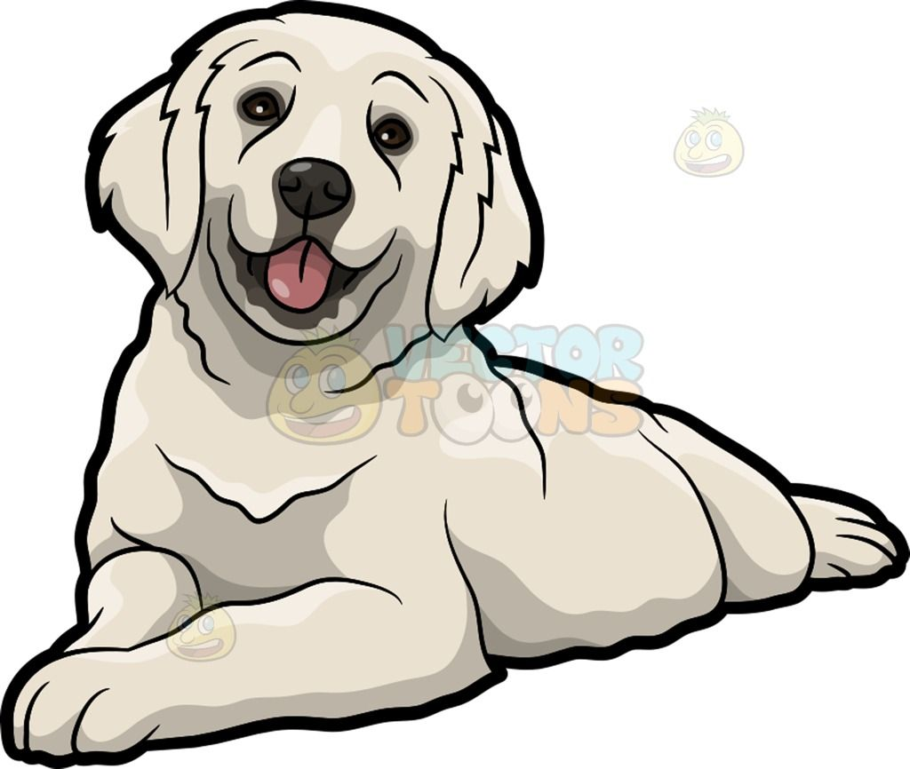 A Cute Golden Retriever Pet Dog Dog Drawing Golden Retriever