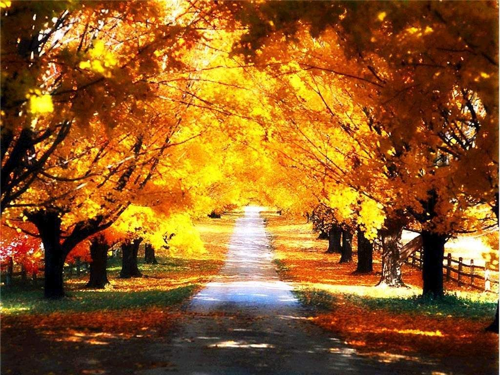 The Tunnel Of Love Autumn Scenery Scenery Pictures Autumn