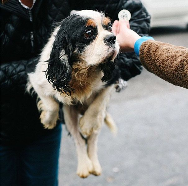 Volunteers Rescue 108 Abused Dogs From Breeding Farm Dogs Puppy Mills Rescue Puppies
