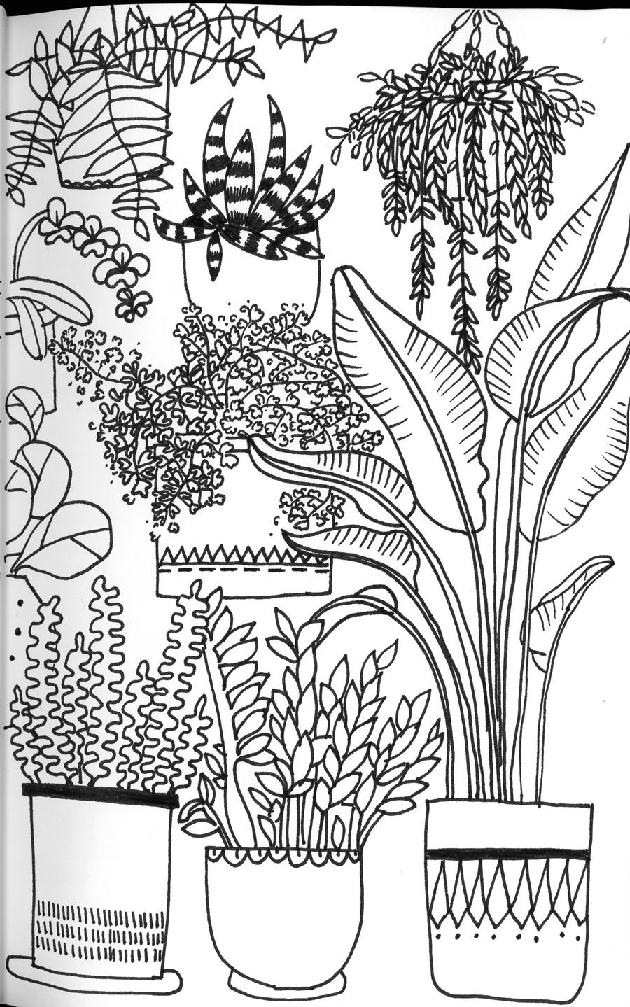 House Plants - day 24 of the January drawing challenge ...