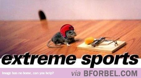 Rodent Extreme Sports…