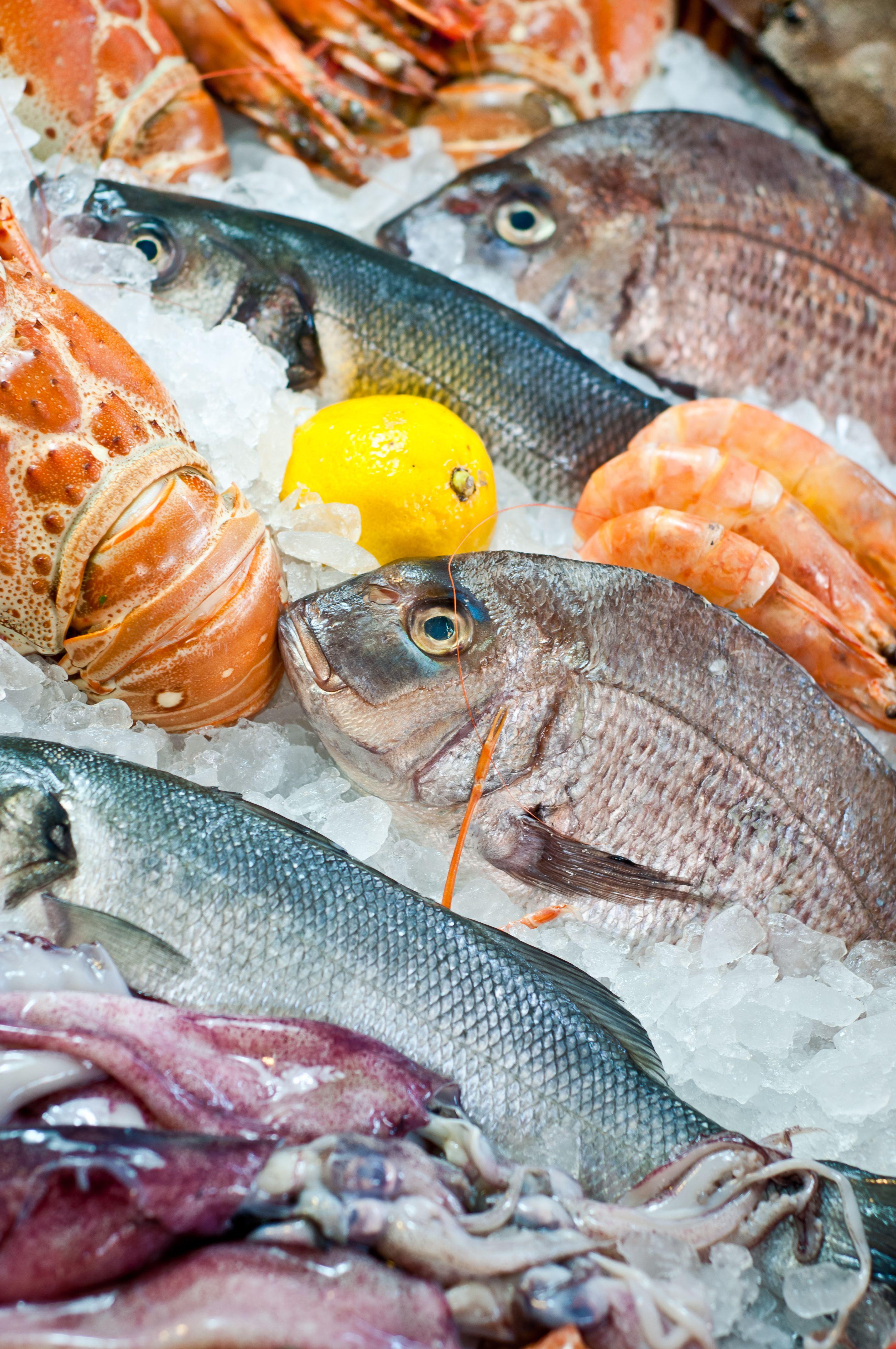 Mediterrafish Fresh Seafood Fish Fish And Seafood Fresh Fish