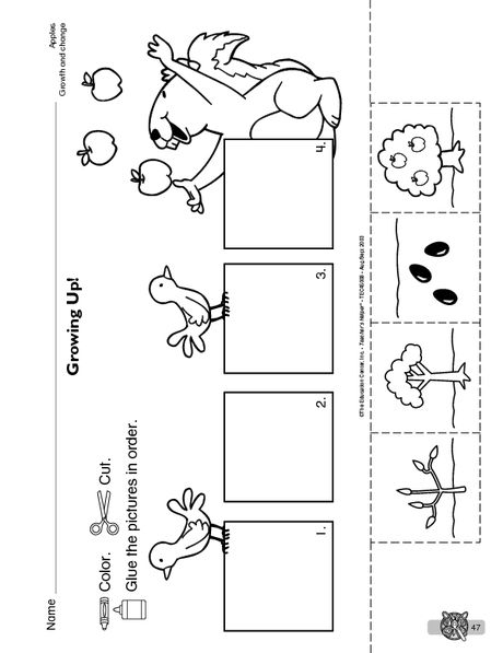 Apple Sequence Printable For Preschool Clipart Library