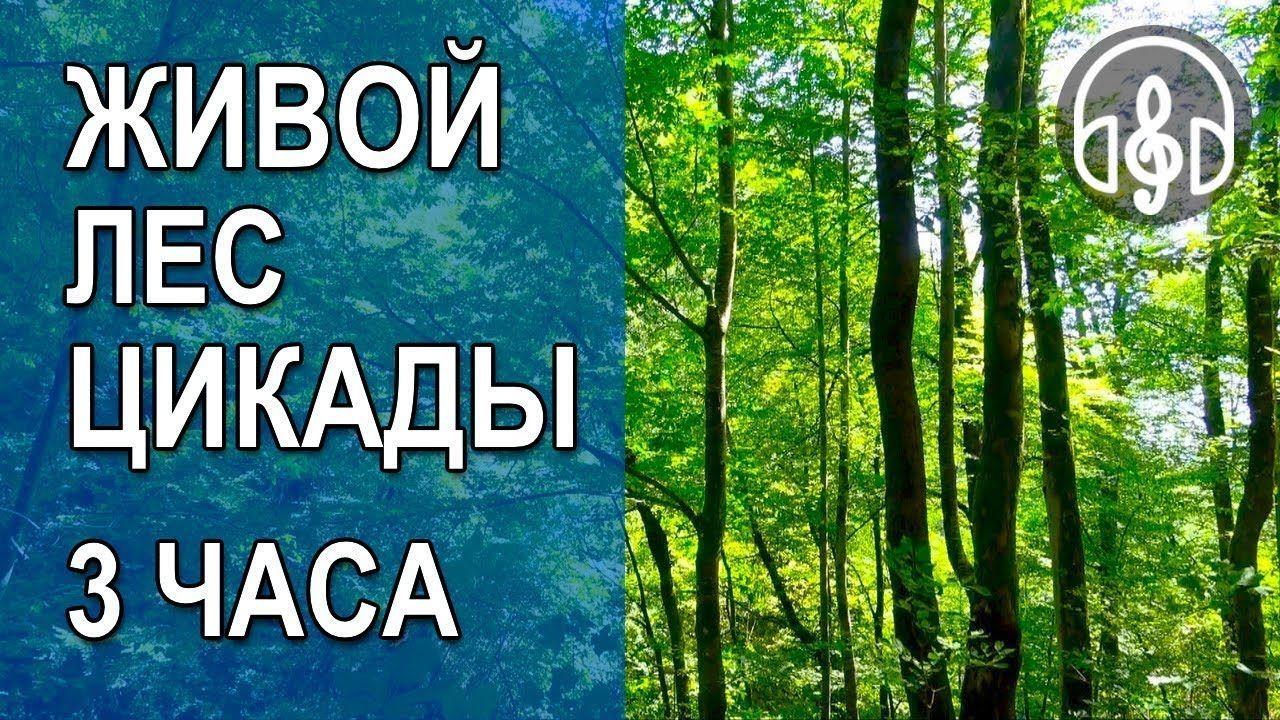 Шум леса звуки скачать