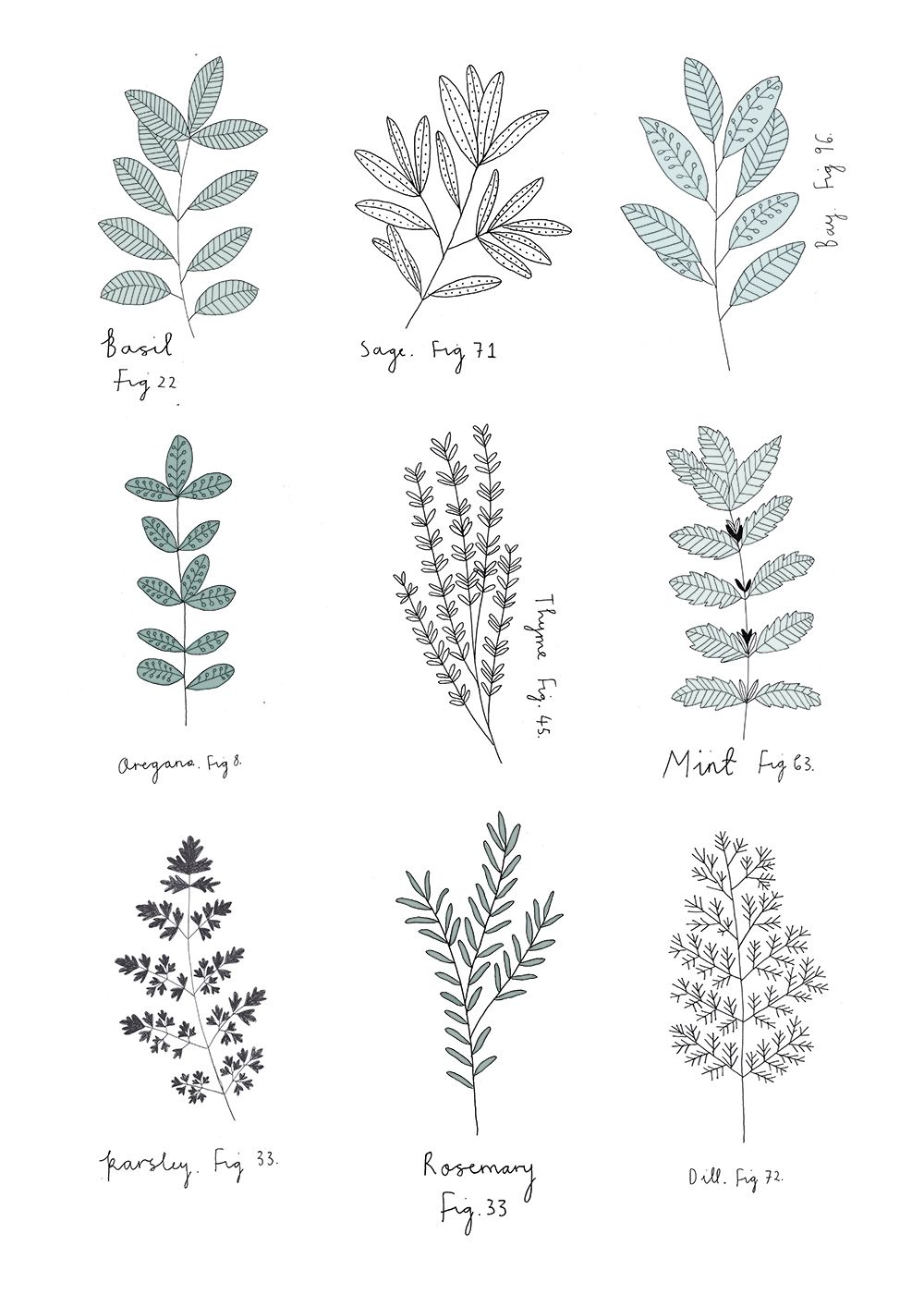 Herb Print By Ryn Frank Www Rynfrank Co Uk Botanical Drawings Plant Drawing Flower Drawing