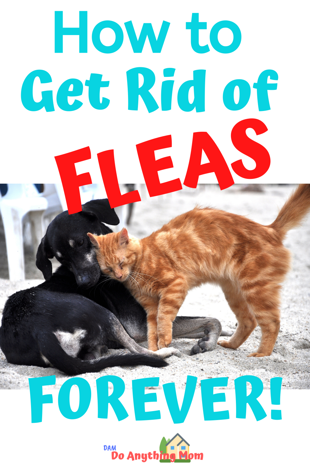 How To Get Rid Of Fleas Forever In 2020 Fleas Flea Spray For Cats Fleas In Yard