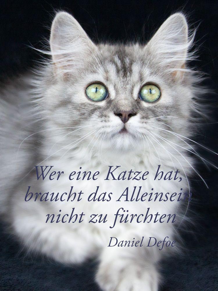 Für alle einsamen Herzen   Katzen zitate, Katzen lustige