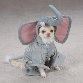 Amazon Com Casual Canine Polyester Elephant Dog Costume Small