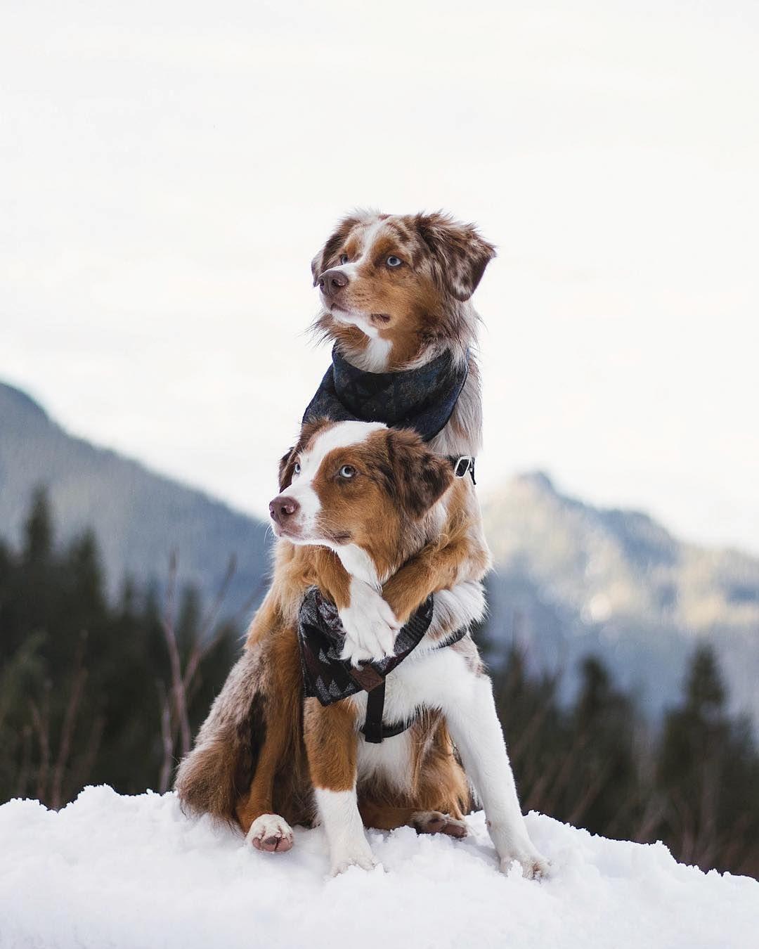 Adventure Dogs Dog Adventure Dogs Hugging Dog Photos