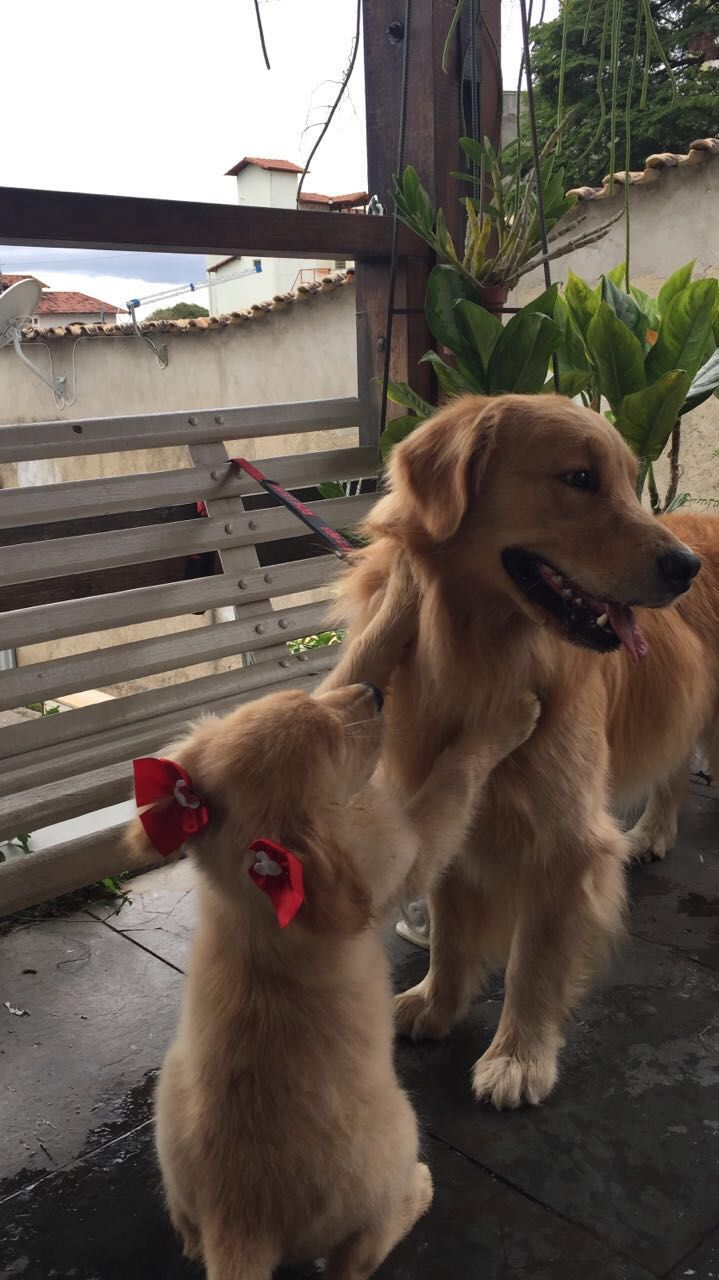 AM Wesley Willian Vídeo Omitido Dogs - 29 adorable animals that will put a smile on your face