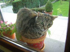 R pulsif pour chat le m lange naturel pour les loigner sans leur faire de mal astuces - Repulsif pour chats dans les jardins ...
