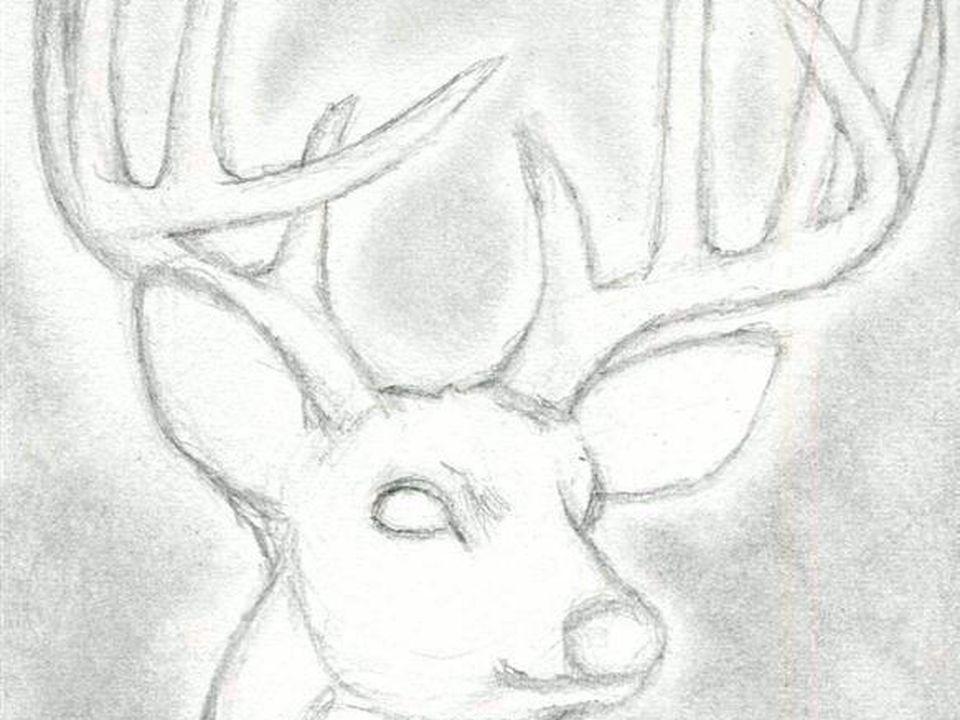 como dibujar algunos animales (realistas) (parte1) Dibujos Dibujo de ciervos Cómo dibujar cosas, dibujos de Animales Realistas, como dibujar Animales Realistas paso a paso