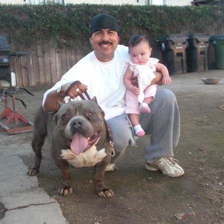 Richard Barajas Of Westside Kennels Bully Breeds Dogs Bully Dog