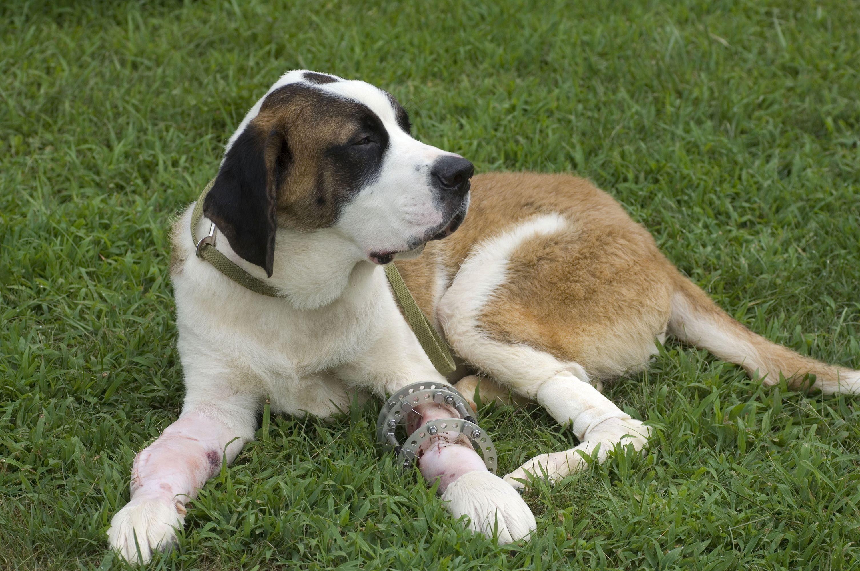 Pin on Dog Safety