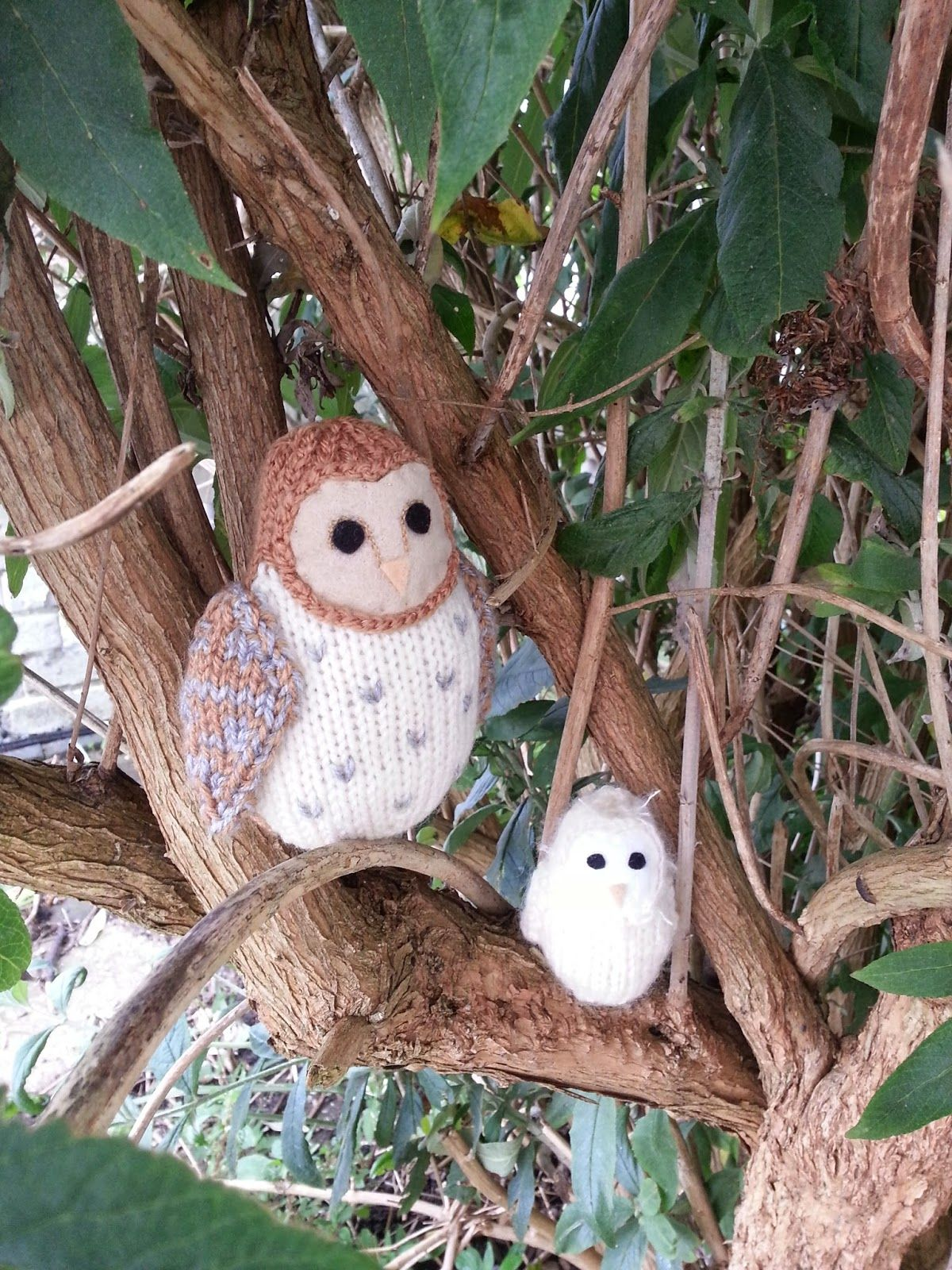 barn owl family, nestling in a tree | Too Cute! | Pinterest | Bird ...