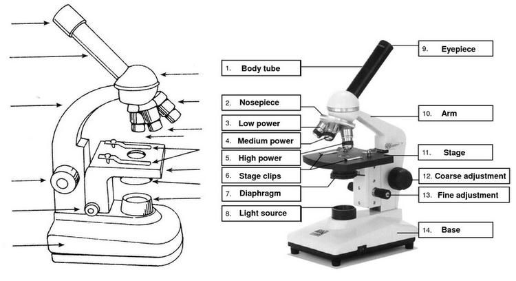 Microscope Parts Introduction Drawing For Students Best