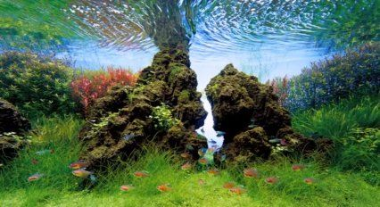 YouTube Video Of The Week: Takashi Amano Aquascaping Video