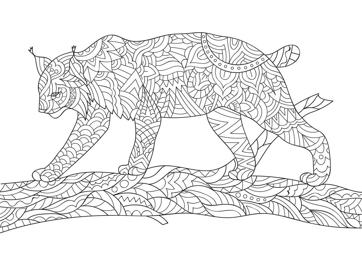 Pin Van Emile Op Coloring Wolf Fox