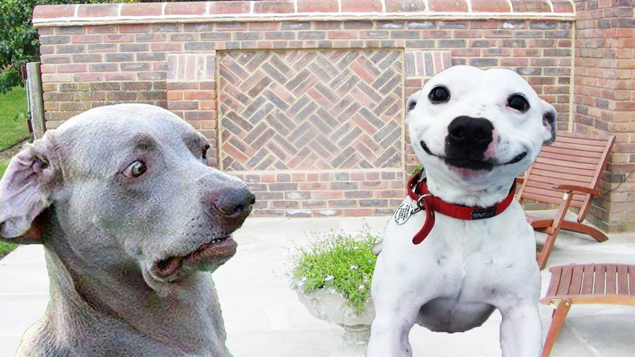 Dogs Making Funny Faces Funny And Cute Dog Compilation Funny