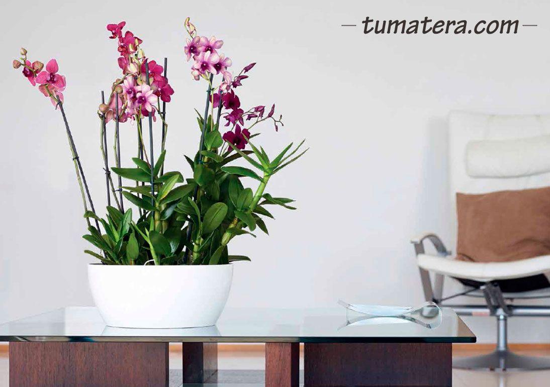 Encuentralas en:  http://www.tumatera.co/products/mpa-351713-barca-02/
