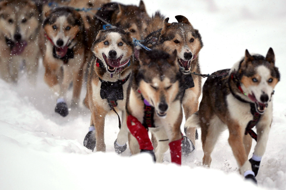 After Sports Were Canceled, Only the Iditarod Remained in