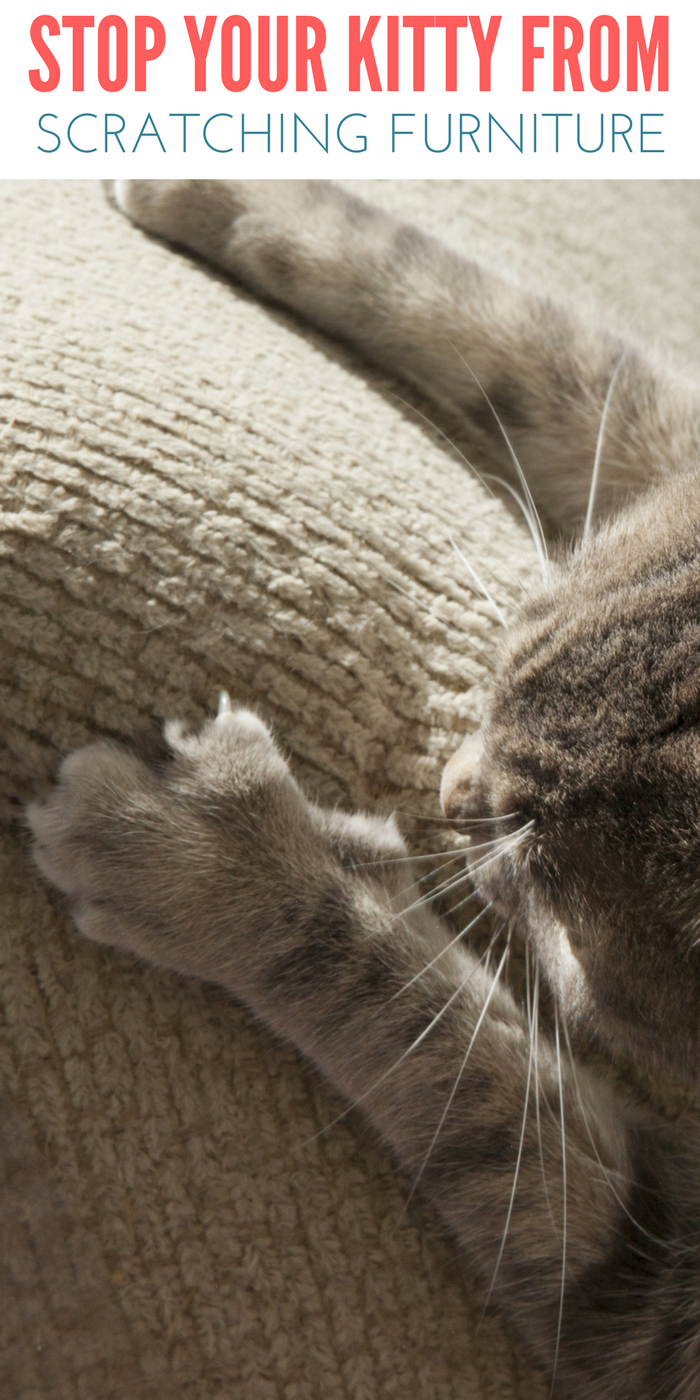 Stop Cats From Scratching On Furniture Furniture Scratches Cat Proof Furniture Cat Proofing