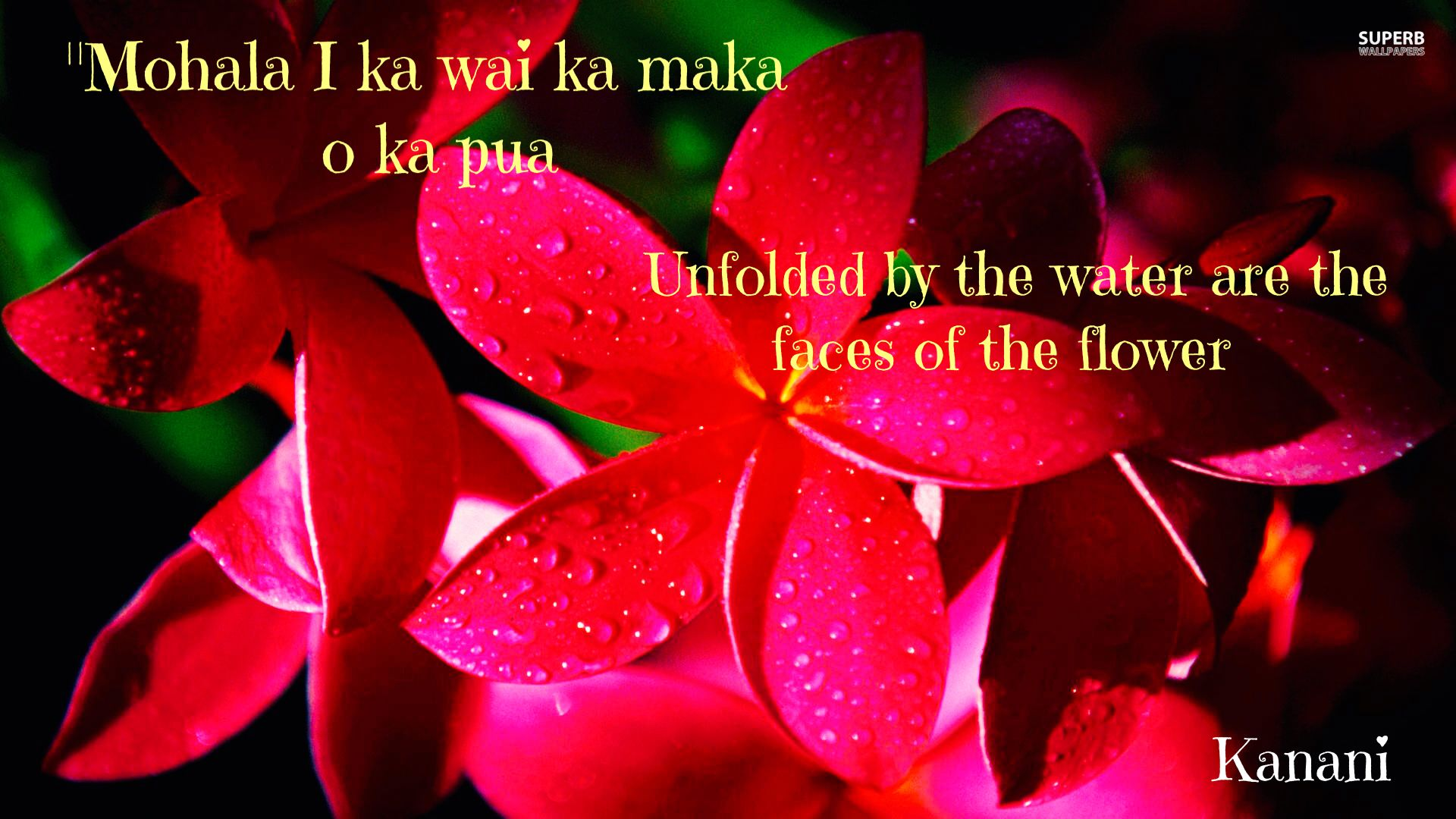 Hawaiian proverb hawaiian proverbs and sayings pinterest beautiful flowers wallpapers for desktop red beautiful flower hd wallpaper hd x 1080 677 kb jpeg x izmirmasajfo Gallery