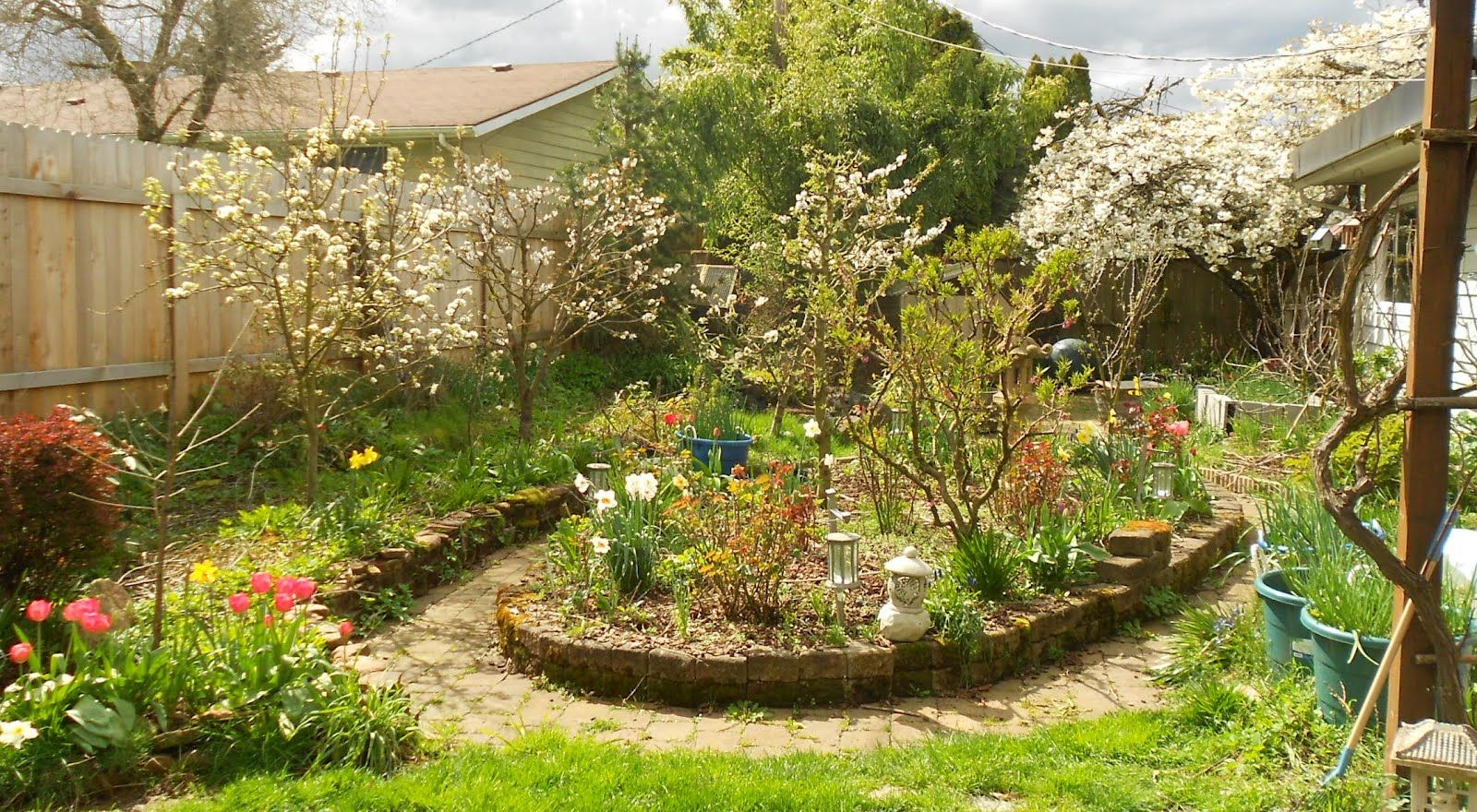 Backyard orchard for the yard s pinterest - Fruit trees in small spaces decoration ...